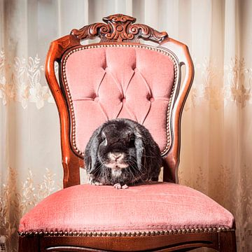 SA11978878 Hangkoor konijn op een rose fluwelen antieke stoel van BeeldigBeeld Food & Lifestyle