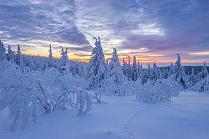 Winter im Harz van