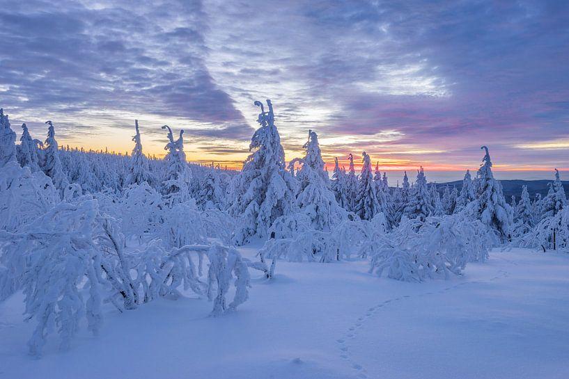 Winter im Harz van Patrice von Collani