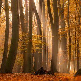 Herbstliche Lichtstimmung von Kurt Krause