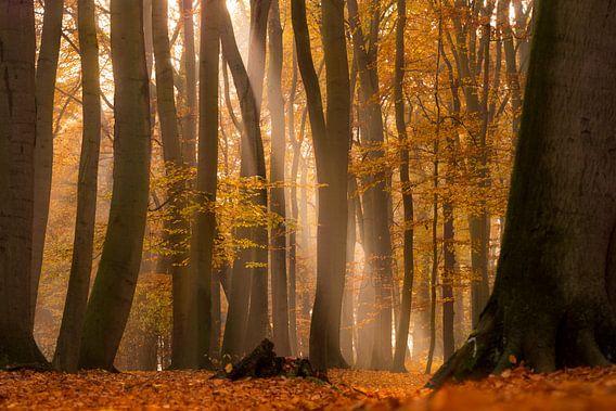 Herbstliche Lichtstimmung
