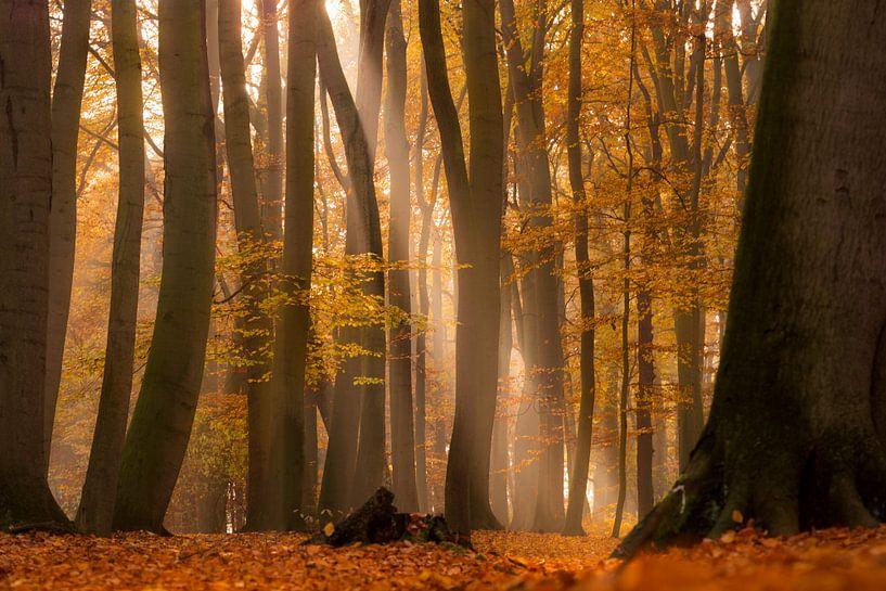 Herbstliche Lichtstimmung van Kurt Krause