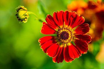 Leuchtende Blumen stehen im Fokus von Matthias Korn