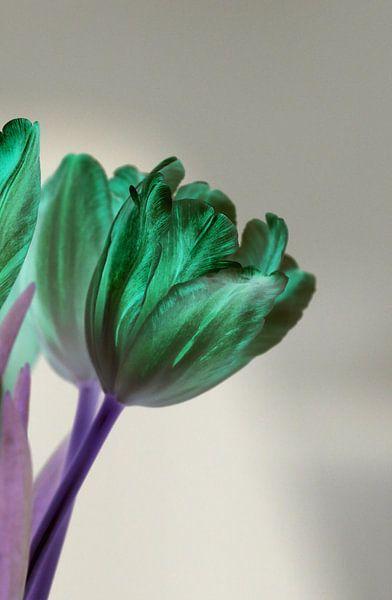 grüne Tulpe van Rosi Lorz