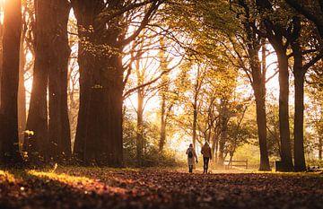 Een zonsondergang wandeling in het bos van Sharon de Groot