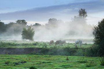 Kühe im Nebel .Markdal Breda von Saskia Dingemans
