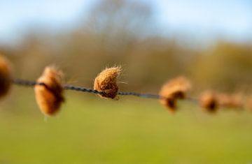 Bolletjes haar van stieren aan een hek van Percy's fotografie
