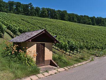 Hut op de wijngaard van Timon Schneider