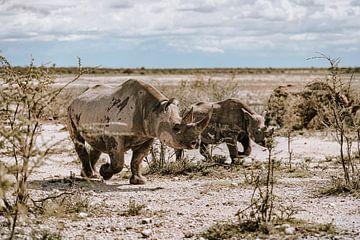 Nashorn Rhino in Afrika Namibia Etosha Nationalpark von Helena Schröder