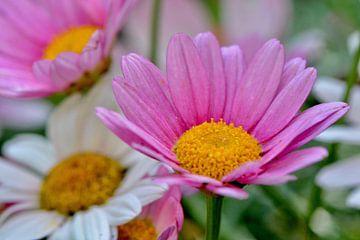 fleurige bloempjes von Mieke Verkennis