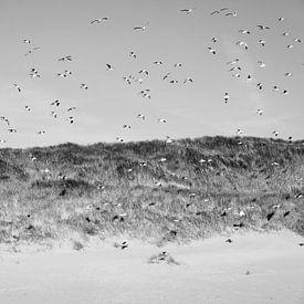 duinen van Hans Bronk