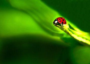 Lieveheersbeestje; klein...maar dapper. van Ida Muller