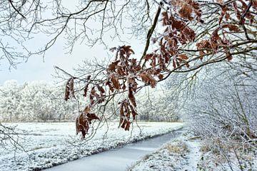 Sneeuw landschap van