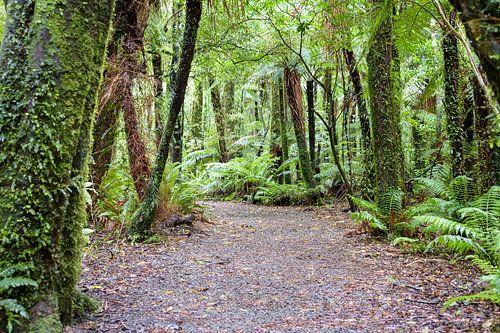 Breed bospad op het Zuidereiland van Nieuw Zeeland