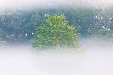 Eenzame boom in de ochtendmist (Utrechtse Heuvelrug, Nederland) van Sjaak den Breeje
