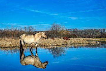 Konikpaard in Lentevreugd van Wim van Beelen