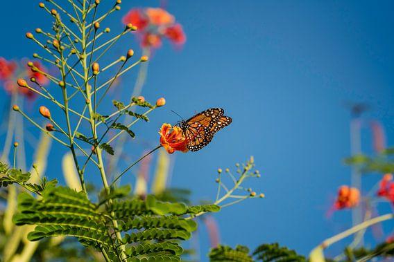 Monarchvlinder tussen de bloemen van Leon Doorn