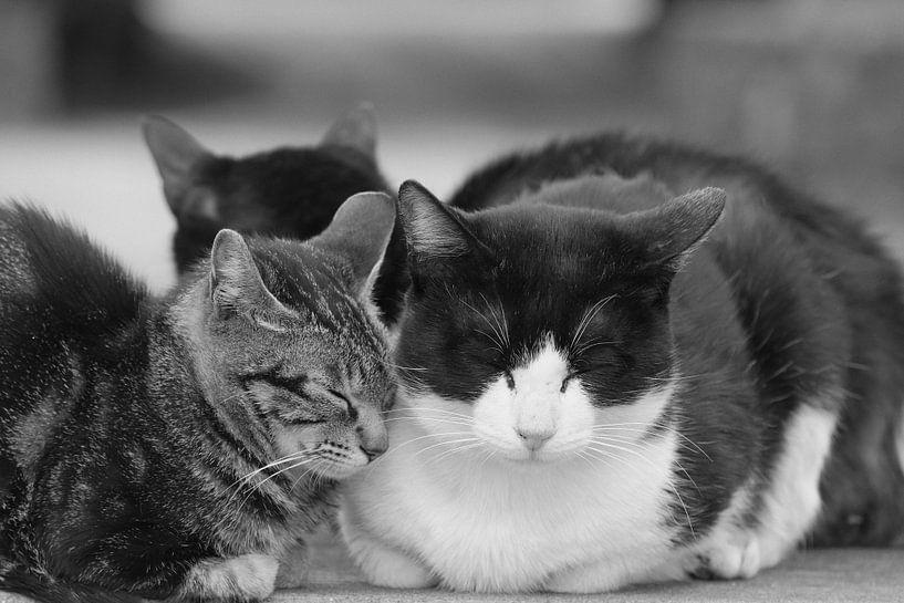 Katten van Sasha Donker
