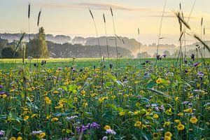 Kleurig bloemenveld met ochtendnevel van Maurice Welling