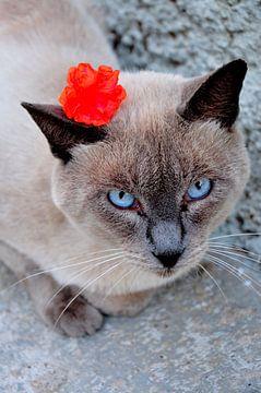 Flower Cat van Sabrina Varao Carreiro