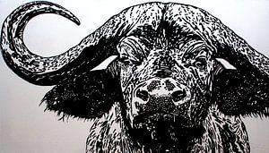 Bruce, de kaapse buffel