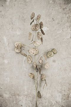 Droog bloemen