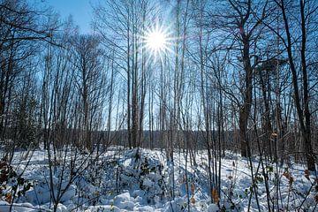 Zonnig sneeuwlandschap