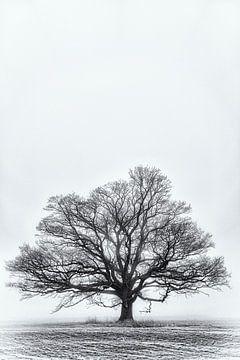Eiche im Winter von Kirsten Warner