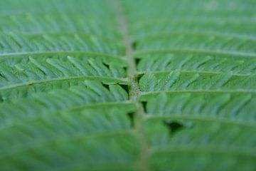 Ik zie ik zie wat jij niet ziet en het is ...groen von Karin Hendriks Fotografie