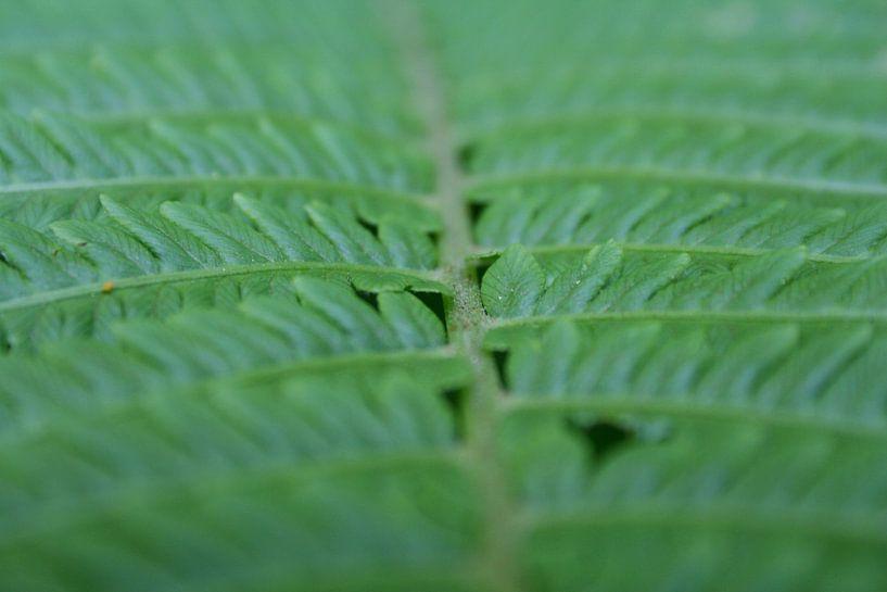 Ik zie ik zie wat jij niet ziet en het is ...groen van Karin Hendriks Fotografie