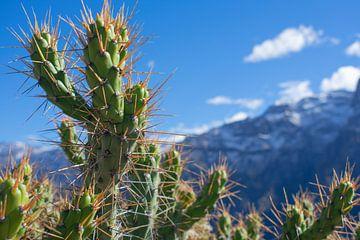 Cactus von Oscar Leemhuis