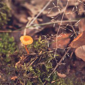 Pilze bis zum Herbstmorgen von Léonie Spierings