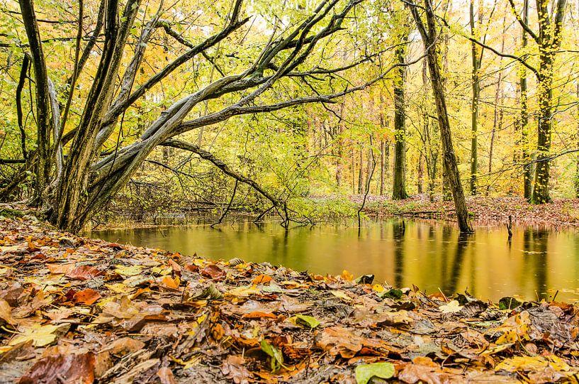 November in het Waterloopbos van Frans Blok
