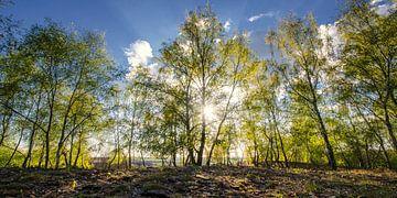 Spring Forest van Steffen Gierok