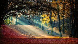 Sonnenstrahlen im Herbst von