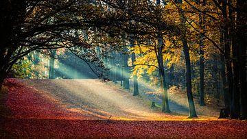 Sonnenstrahlen im Herbst von Holger Debek