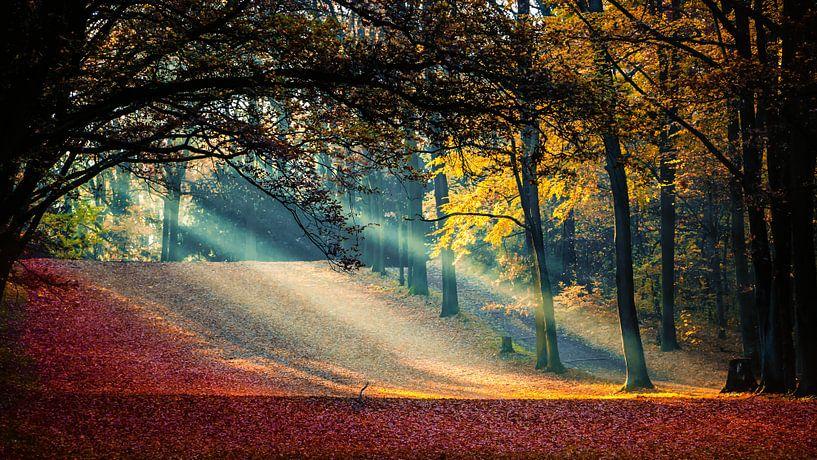 Sonnenstrahlen im Herbst van Holger Debek
