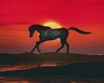 Arabisch paard op het strand bij zonsondergang