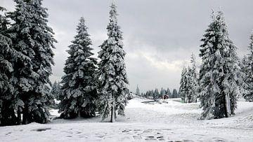 Fichtenbäume im Schnee bei Rogla in den slowenischen Alpen von Gert Bunt