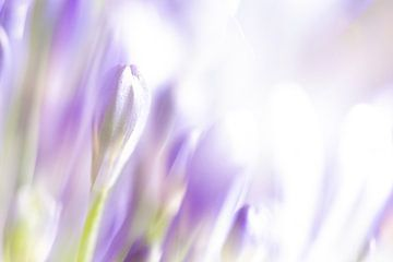 Blütencreme von Rob Bergman