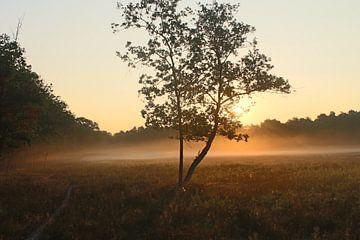 Boom bij ochtendgloren van Natasja van Dwingelen