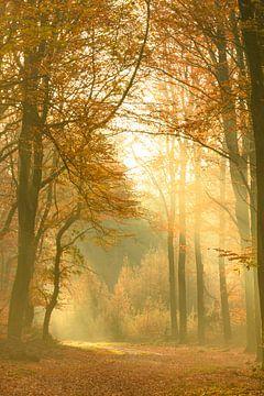 Weg durch einen nebelhaften Wald während eines schönen nebeligen Herbsttages von Sjoerd van der Wal