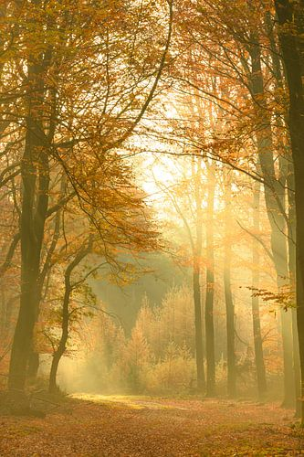 Pad door een Beuken bos tijdens een mooie mistige herfstdag.