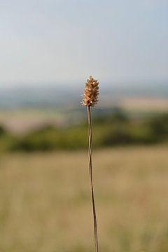 Grassprietje van Patricia Leeman