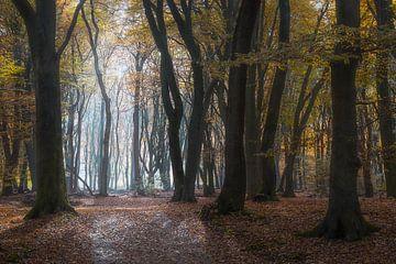 Mysterieuze bomen van Roelof Nijholt