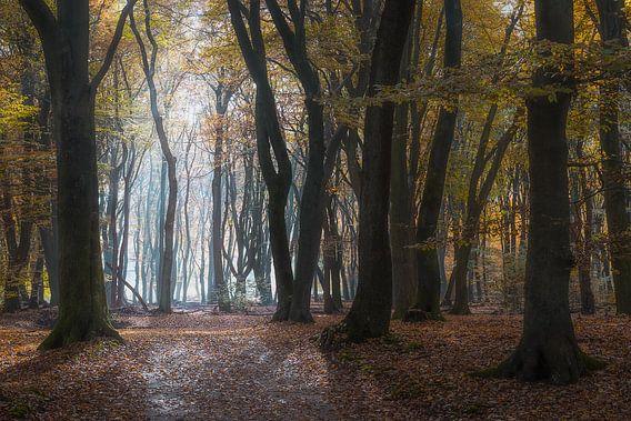 Geheimnisvolle Bäume