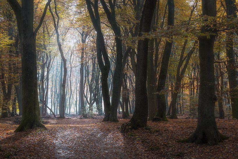 Geheimnisvolle Bäume von Roelof Nijholt