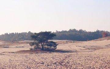 Boom op de Veluwse zandvlakte van Cinthia Mulders