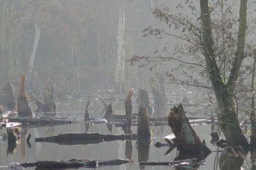 mangrove in Brüggen van Eugene Lentjes