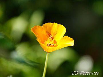 Blume mit Insekt van Christina Sudbrock